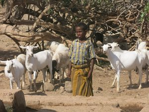 Sector de desarrollo rural y lucha contra el hambre