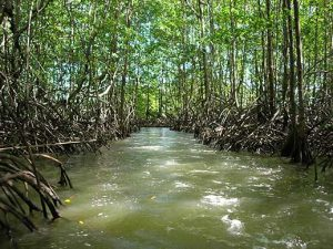 Sector sostenibilidad Ambiental